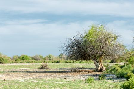 coneflowers: steppe, prairie, veldt, veld, flood plain. beautiful nature in the steppes of Kazakhstan