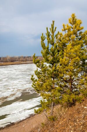 Spring River, the ice on the river. picturesque spring landscape with river ice melted bare trees and beautiful clouds in the blue sky photo