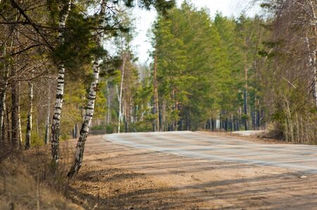 Country road in early spring in the spruce forest. provincial highway. public road or other public road on land photo