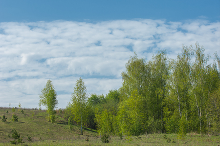 krasnodar region: Spring ravine tree. Soil erosion in a spring season. Trees along a sunny ravine in spring Stock Photo