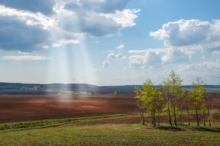 plowed: Field plowed, sown cereals. Plowed field in spring day. Black soil plowed field. Plowed field in the blue sky Stock Photo