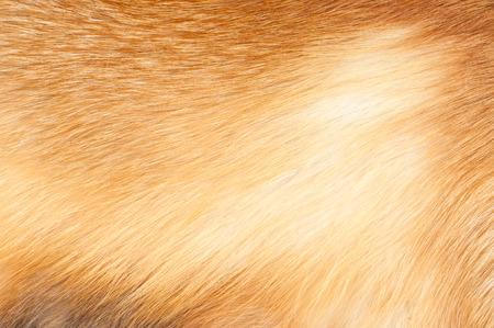 Textures red fox fur. Red fox shaggy fur texture cloth abstract, furry rusty texture plain surface, rough pelt background in horizontal orientation, nobody. Standard-Bild
