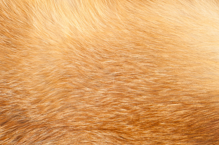 Textures red fox fur. Red fox shaggy fur texture cloth abstract, furry rusty texture plain surface, rough pelt background in horizontal orientation, nobody. photo