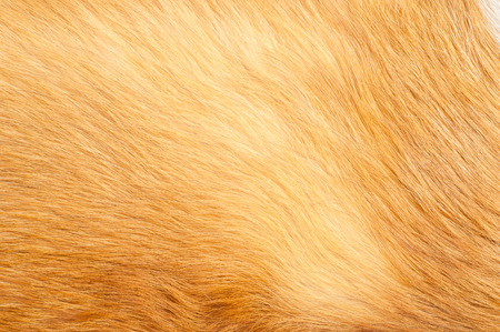 Textures red fox fur. Red fox shaggy fur texture cloth abstract, furry rusty texture plain surface, rough pelt background in horizontal orientation, nobody. Stock Photo