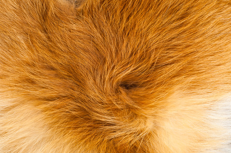 Textures red fox fur. Red fox shaggy fur texture cloth abstract, furry rusty texture plain surface, rough pelt background in horizontal orientation, nobody. Stockfoto