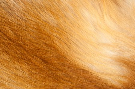 soft background: Textures red fox fur. Red fox shaggy fur texture cloth abstract, furry rusty texture plain surface, rough pelt background in horizontal orientation, nobody. Stock Photo