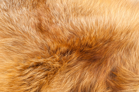 Textures red fox fur. Red fox shaggy fur texture cloth abstract, furry rusty texture plain surface, rough pelt background in horizontal orientation, nobody. Banco de Imagens