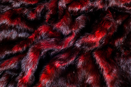 carnivore: Mink fur animal cherry blossoms. a small, semiaquatic, stoatlike carnivore native to North America and Eurasia. The American mink is widely farmed for its fur,
