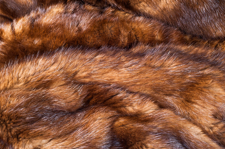 farmed: Mink fur animal . a small, semiaquatic, stoatlike carnivore native to North America and Eurasia. The American mink is widely farmed for its fur,