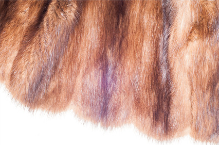 mink: Mink fur animal . a small, semiaquatic, stoatlike carnivore native to North America and Eurasia. The American mink is widely farmed for its fur,