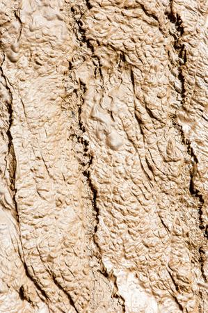 desert ecosystem: Texture  sludge  silt  clay  mud  ooze  slime