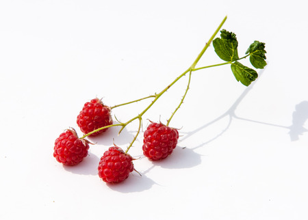 stash: texture. background. raspberry razz fence stash. an edible soft fruit related to the blackberry consisting of a cluster of reddishpink drupelets.