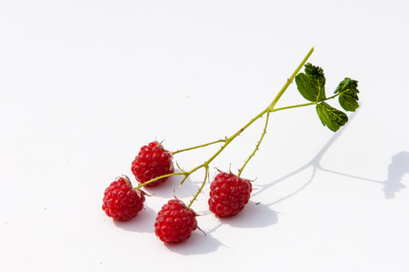 stash: texture. background. raspberry razz fence stash.  Stock Photo