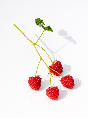 stash: Raspberry  razz  fence  stash.