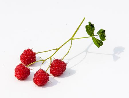 stash: Raspberry  razz  fence  stash. Stock Photo