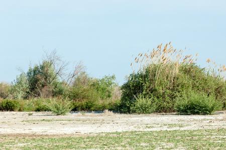soil erosion: Summer in the steppe. Saline soil erosion. reed