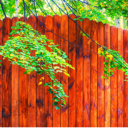 wood structure: Texture of wood structure. Stock Photo