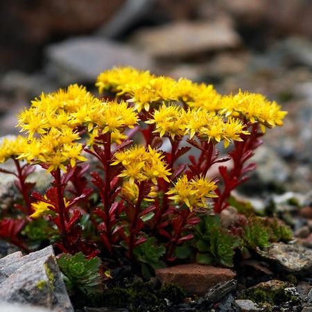 carpels: flowers