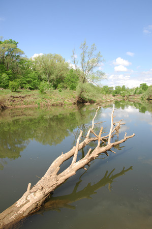 reflexion: spring river. River and spring forest. Nature composition. Reflexion of clouds in the spring river. Trees on the shore of a river in spring