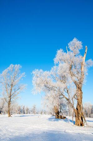 wintertide: winter frost. winter-tide, winter-time.  a deposit of small white ice crystals formed on the ground or other surfaces when the temperature falls below freezing. Stock Photo