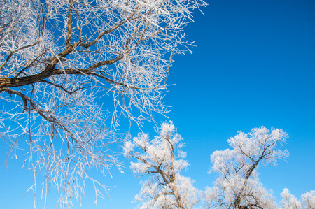 winterly: winter frost. winter-tide, winter-time.  a deposit of small white ice crystals formed on the ground or other surfaces when the temperature falls below freezing. Stock Photo
