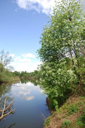 reflexion: r�o de primavera. R�o y bosque de la primavera. Composici�n de la naturaleza. Reflexi�n de las nubes en el r�o de la primavera. �rboles en la orilla de un r�o en primavera