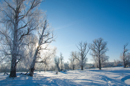 paisaje natural: natural landscape covered with snow on winter