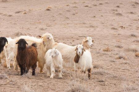 veldt: steppe, prairie, veldt, veld. steppes sand goats.  a large area of flat unforested grassland in southeastern Europe or Siberia.
