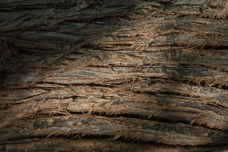 bark background: texture of tree bark. background, bark of the tree, Stock Photo