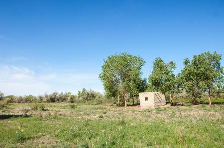 veldt: steppe, prairie, veldt, veld.  Spring Central Asia. Kazakhstan. turanga poplar.  Euphrates Poplar. abandoned mud huts Stock Photo