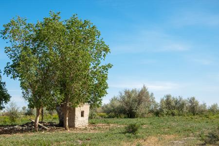 veld: steppe, prairie, veldt, veld.  Spring Central Asia. Kazakhstan. turanga poplar.  Euphrates Poplar. abandoned mud huts Stock Photo