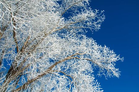 winterly: The winter sun frost. cold. a deposit of small white ice crystals formed on the ground or other surfaces when the temperature falls below freezing.
