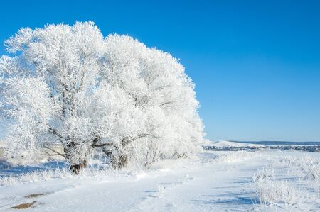 catarrh: The winter sun frost. cold. a deposit of small white ice crystals formed on the ground or other surfaces when the temperature falls below freezing.
