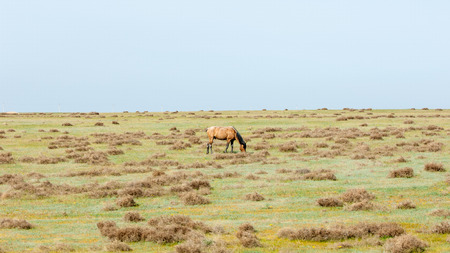 stride: The horse in the steppe