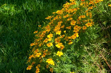 bina: blur, Texture, background. Gaillardia.  ɡeɪˈlɑrdiə, the blanket flowers, is a genus of flowering plants in the sunflower family,