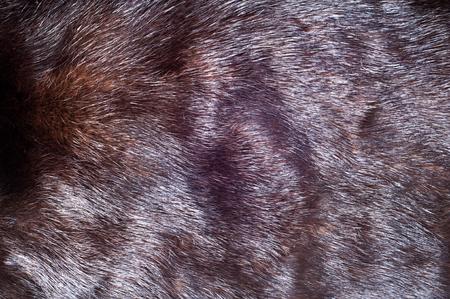 visone: Trama, sfondo. pelliccia di visone scuro (marrone cioccolato)