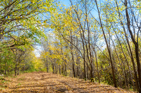 deciduous forest: Autumn deciduous forest, sunny day Stock Photo