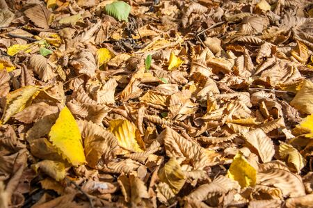 deciduous: Autumn deciduous forest, sunny day Stock Photo