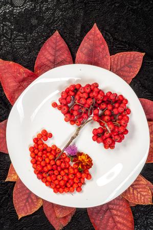 eberesche: rowan berries in autumn