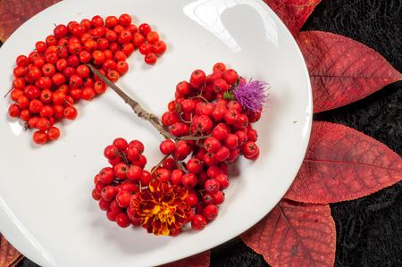 rowan: rowan berries in autumn