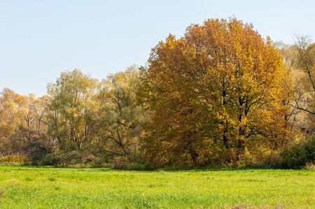fall landscape: Fall landscape. Beautiful autumn forest in the national park  Sokolki Tatarstan Russia