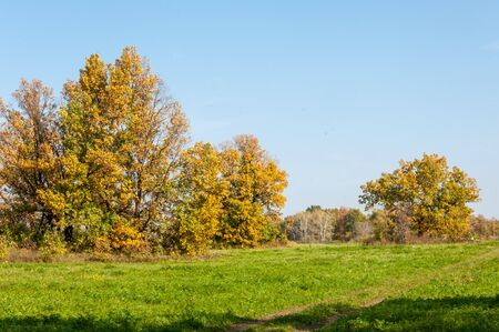 paysage automne: Autumn landscape. Big autumn oak with red leaves on a blue sky background.