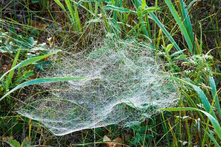 spiderweb: web, cobweb, spiderweb, net, tissue, spiders web. Web in the autumn forest