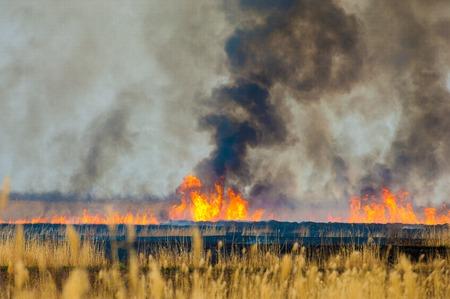 갈대을 레코딩합니다. 화재. 이른 봄, 시든 갈대, 화재의 부주의 스톡 콘텐츠 - 46788537