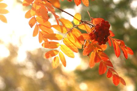 autumn Stock Photo - 46788876