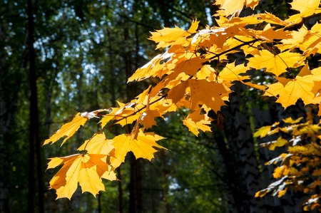 fall beauty: autumn, fall, leaf fall, fall of the leaf. the third season of the year, when crops and fruits are gathered and leaves fall, in the northern hemisphere from September to November and in the southern hemisphere from March to May. Stock Photo