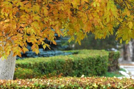 virid: autumn