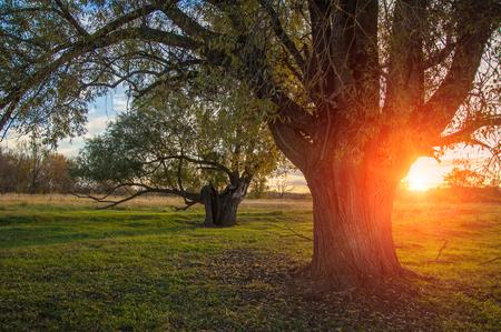 aureola: Sunset in autumn. Sunset in autumn forest. Beautiful sunrise on the field. halo, aureole, halation, nimbus, glory, aureola Stock Photo