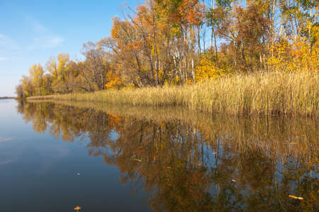 reflection: Autumn calm on the lake reflection of trees in water. Beautiful forest reflecting on calm lake shore. Beautiful calm lake in the fall reflecting trees