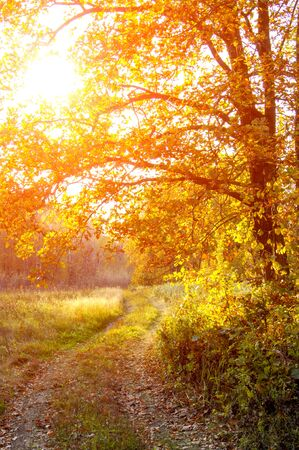 unpaved road: The road in the oak woods in autumn. Dirt road in a mixed forest on a sunny evening. Beautiful Fall scene on curved unpaved road with colorful leaves on trees and in the road